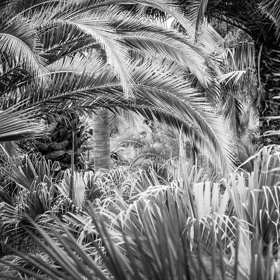 Botanischer Garten (Madeira)