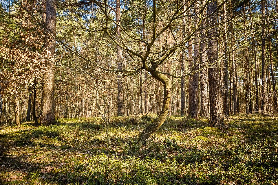 Im Wald bei Celle